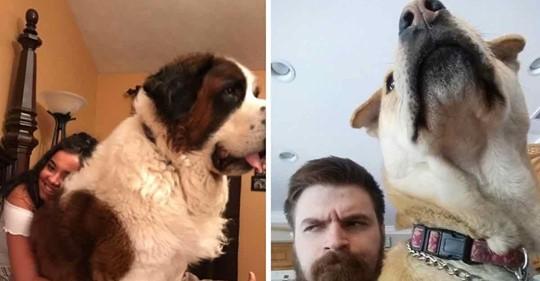 14 große Hunde