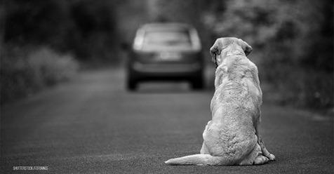 """Hund """"Jules"""" zweimal an einem Tag ausgesetzt: Halterin kettete ihn mehrfach an Baum"""