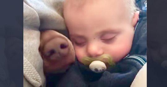 Mama filmt schlafendes Baby   daneben taucht eine pelzige Nase auf