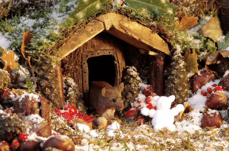 Dieser Mann entdeckte eine Mäuseplage in seinem Garten und beschloss, ein Dorf für sie zu bauen.