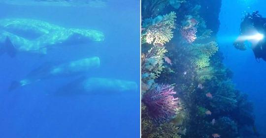 Wie sich das Mittelmeer im Lockdown erholt – vor Elba tummeln sich plötzlich Pottwale