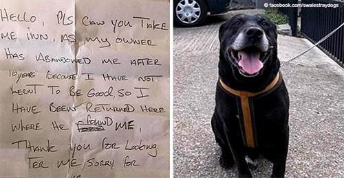 Älterer Hund mit herzloser Nachricht auf der Straße ausgesetzt