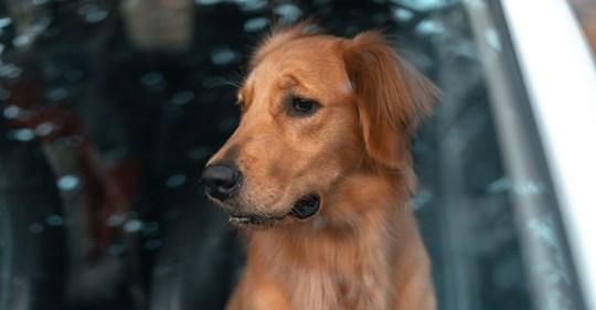 Keine Einsicht: Mann lässt Hund zwei Stunden in Hitze-Auto leiden