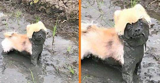 10 Hunde, die im Matsch gespielt haben