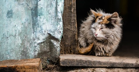 Katze lebend gehäutet: Polizei sucht nach Tiermörder*in