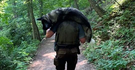 Parkwächter trägt dehydrierten Hund eine Stunde durch die Wildnis