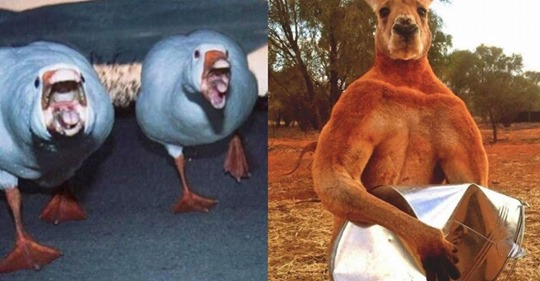 Tiere, die zum Fürchten aussehen
