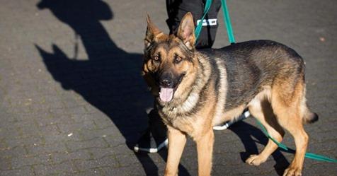 Erster Hund mit Covid 19 in den USA gestorben – ist auch mein Haustier bedroht?
