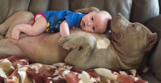 Vater verteidigt sich dafür, sein Kleinkind mit einem Pitbull ein Nickerchen machen zu lassen