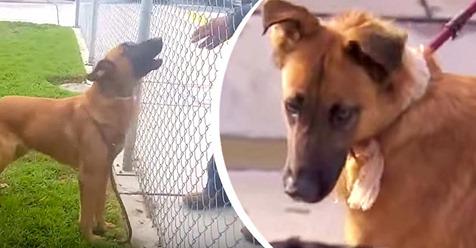 Eine Hündin mit gebrochenem Herzen beobachtet, wie ihre ehemalige Familie ins Tierheim kommt, um einen anderen Hund zu adoptieren, bevor sie auch ein Zuhause findet, in dem sie bleiben kann