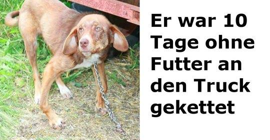 Mann bricht kleinem Hund die Beine und setzt ihn aus