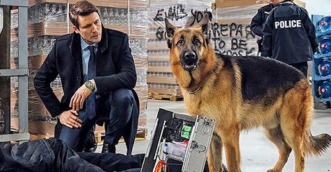 ZWEITES TV-COMEBACK Kommissar Rex ist wieder da