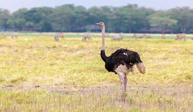 Brutale Tierquälerei: Jugendliche schlagen mit Rechen auf Emu ein