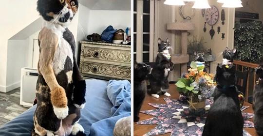 15 Katzen, von denen ich inständig hoffe, dass bei ihnen alles okay ist