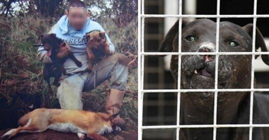Schottland: Tierquäler zu 10 Monaten Haft verurteilt – kaufte Katzen im Internet, damit seine Hunde sie zerfleischen konnten
