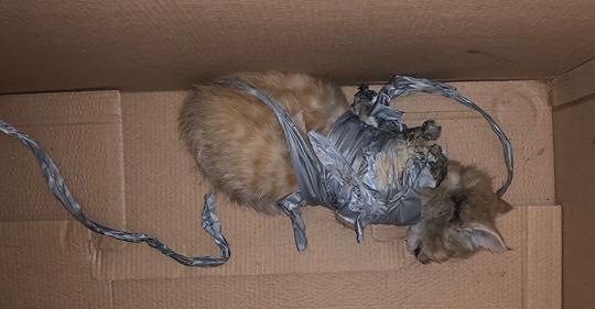 Katzenbaby 'Charlie' mit angeklebten Feuerwerkskörpern schwer verbrannt & in Müll geworfen