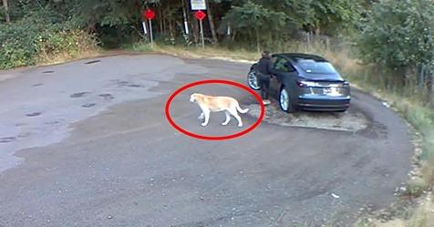 Frau setzt ihren Hund aus - Tierschützer posten Video und haben emotionale Botschaft
