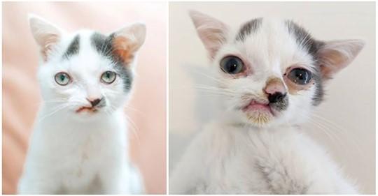 """Katze wurde Schädelverformung geboren & hat """"verdrehtes"""" Gesicht: Sucht ein Zuhause"""