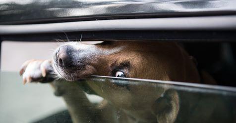 BESITZER ANGEZEIGT Passant rettet Hund aus Hitze-Auto