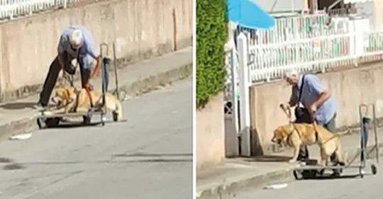 Rentner schiebt seinen alten, kranken Hund im Einkaufswagen Gassi