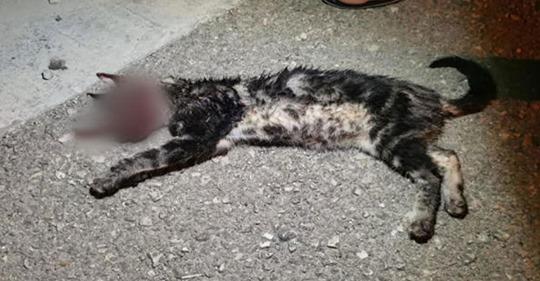 Jugendliche quetschen Katze (†) nachts auf der Straße die Augen aus