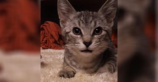 Katzenbaby 'Wantan' bei voller Fahrt aus Autofenster in Köln geworfen