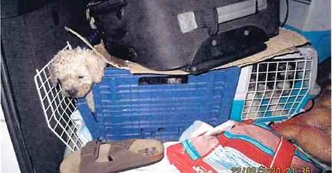 Zwischen Kartons, Plastikkisten und Kot: Polizei befreit elf Hundewelpen aus Fahrzeug