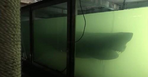 Luke McPherson findet toten Hai in verlassenen Tierpark