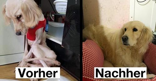16 Vorher nachher Bilder von adoptierten Hunden