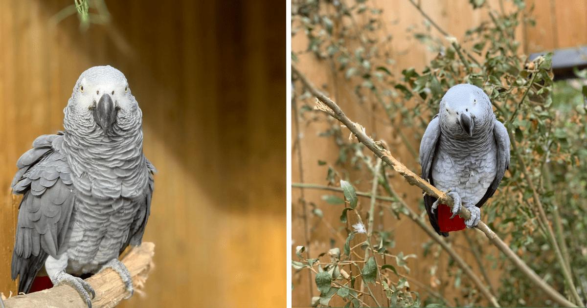Fünf Papageien werden aus der Öffentlichkeit eines Wildparks gezogen – hatten Besucher zu sehr beleidigt