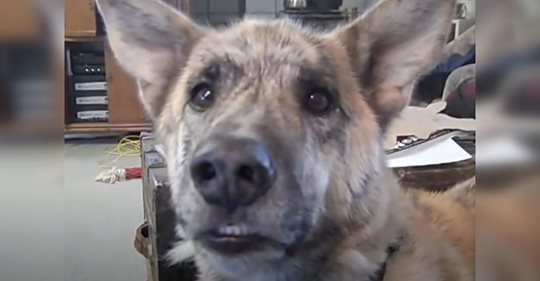 Der Besitzer erzählt dem Hund, dass er die Leckereien an die Katze weitergegeben hat – und kommt damit zu Ruhm im Internet