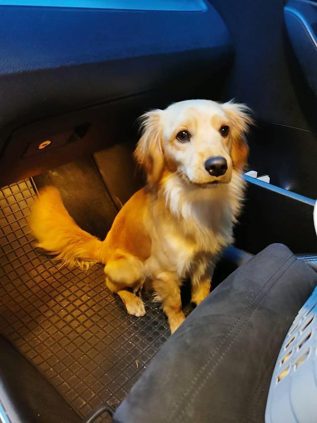 Unbekannter wirft Hund aus Auto   Zeugen nehmen die Verfolgung auf