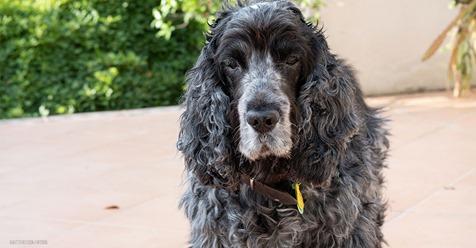 Rocky (†15) war 10 Jahre verschwunden: Hund stirbt wenige Tage nach Wiedersehen mit Frauchen