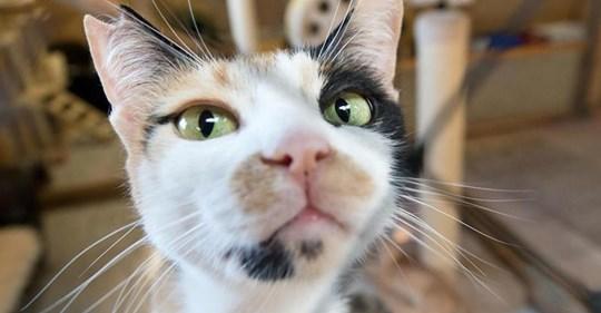 Gehäutet und zerstückelt: Passanten finden grausam zugerichtete Katze