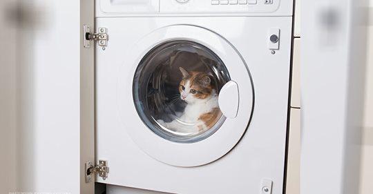 Mann tötet Katze im Wäschetrockner – Tierquäler muss ins Gefängnis