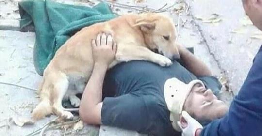 16 Fotos, die die bedingungslose Treue von Hunden zeigen