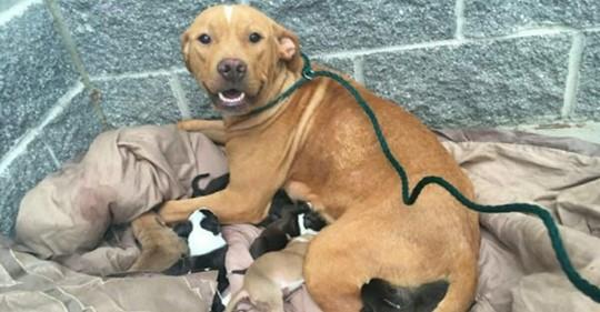 Herzloser Besitzer setzt Hundemama aus, die kurz zuvor ganze 10 gesunde Welpen auf die Welt brachte