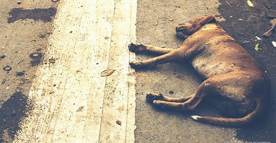 Hund wird zur Bestrafung hinter fahrendem Auto hergeschleift – Mutiger Augenzeuge greift ein