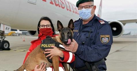 """Tierheim Hund """"Quattro"""" darf für Polizei arbeiten: Schäferhund bekommt Ausnahme"""