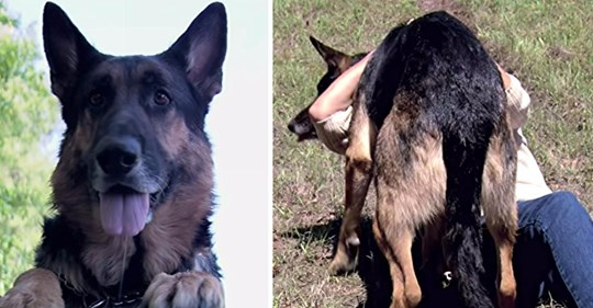 Frau steckt in Autounfall fest - Kurz darauf rettet sie ein heldenhafter streunender Hund und bringt sie in Sicherheit