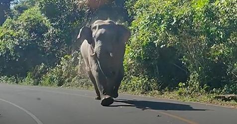 Schockmoment für Familie: Elefant attackiert Auto