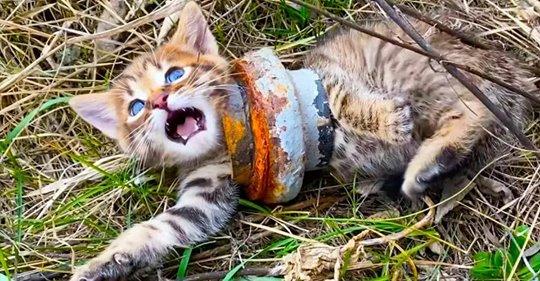 In Wildnis lebende Katze bleibt lebensgefährlich in Eisenrohr stecken – Spaziergänger kümmert sich sofort