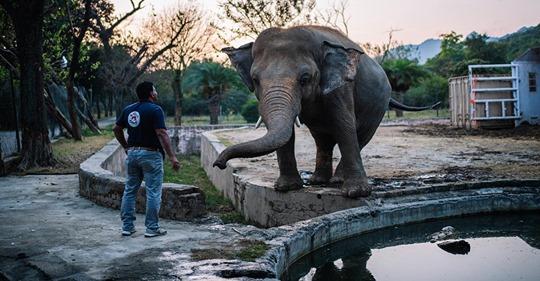 Nach 35 Jahren: Der einsamste Elefant der Welt fliegt jetzt in die Freiheit