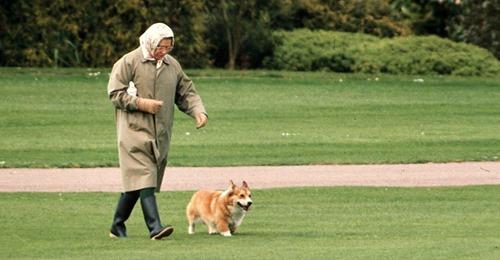 Die Queen ist bestürzt: Ihr vorletzter Hund Vulcan ist tot!