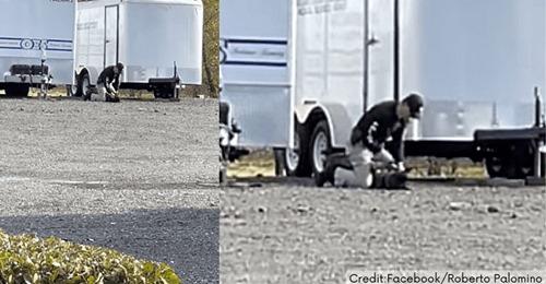 Polizist wird gefilmt, wie er hilflosen Hund zu Boden drückt und auf ihn einschlägt – dieser jault vor Schmerzen