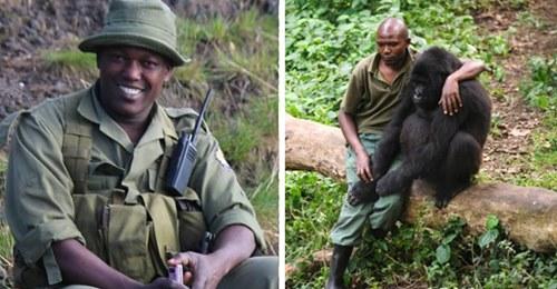 Bewaffnete Männer überfallen und töten 6 Ranger in Gorilla Nationalpark – Motiv noch unklar