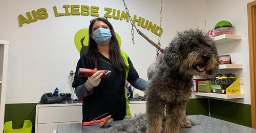 GERICHTSURTEIL FÜR NRW Hundefriseure dürfen weiter arbeiten