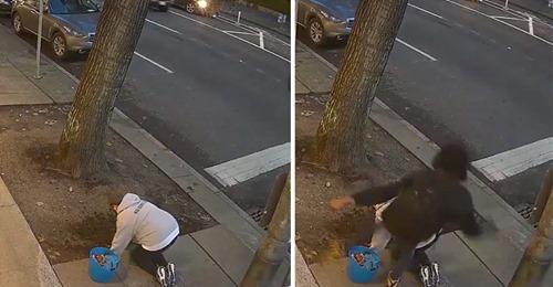 Mann (19) tritt Frau (54) ins Gesicht, die Blumen an Straße pflanzt: 10 Brüche im Gesicht