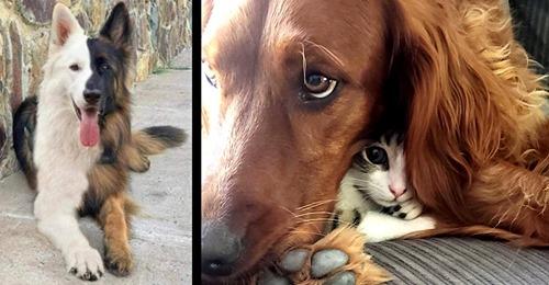 Süß: 16 aufmunternde Hundebilder