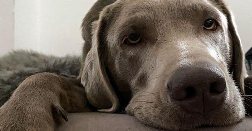 ARTGENOSSEN TREFF TROTZ CORONA Drive Inn für gelangweilte Hunde Komm! Hundeschule in Senden empfängt nur die Vierbeiner